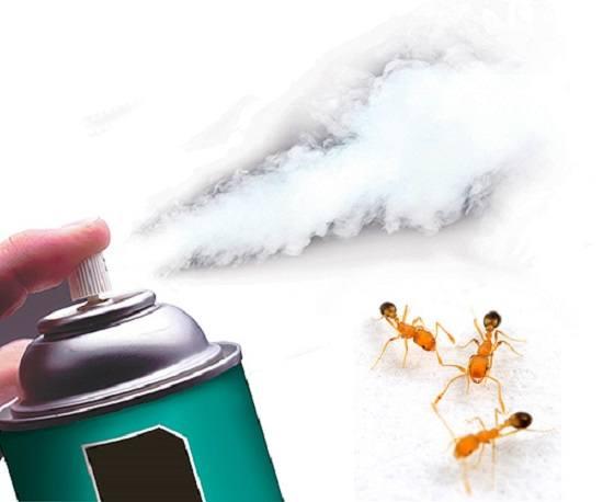 Очень важно вовремя начать борьбу с рыжими муравьями