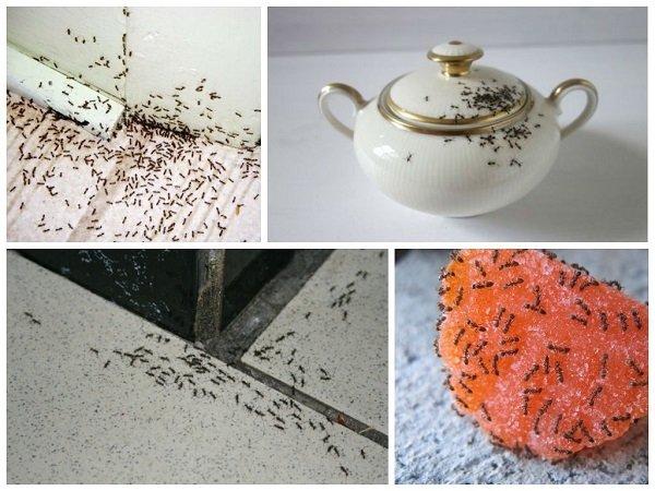 Размещайте приманки около муравьиных троп