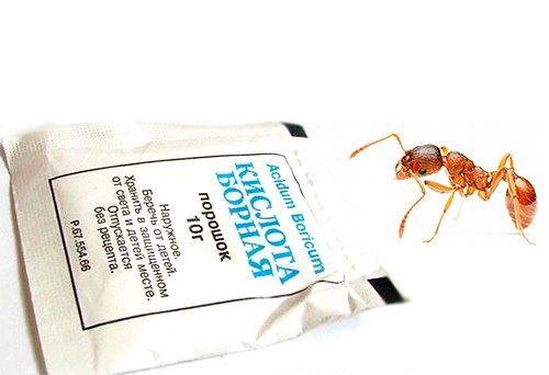 Борная кислота против муравьев