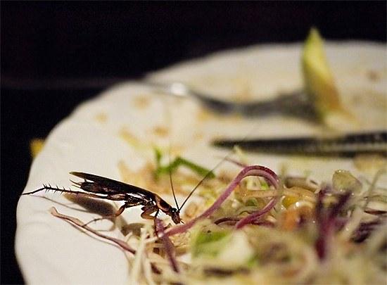 К еде, которую ел таракан, лучше не притрагиваться