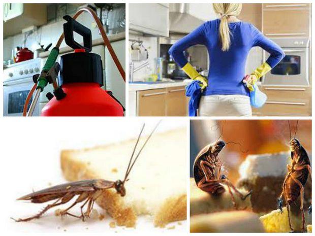 Избавляемся от тараканов