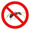 Какие средства против муравьев наиболее эффективны?