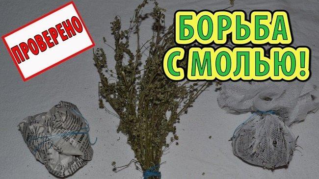 Полынь: эффективное народное средство для борьбы с молью
