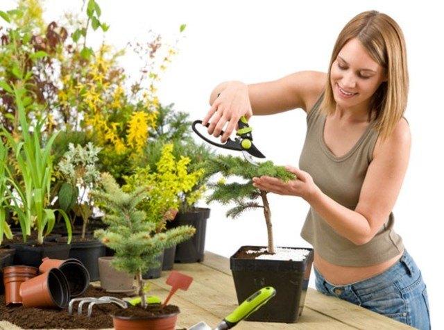 Уход за комнатными растениями - профилактика появления мошек