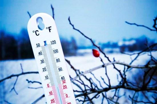 Слишком высокая или слишком низкая температура уничтожит вредителей