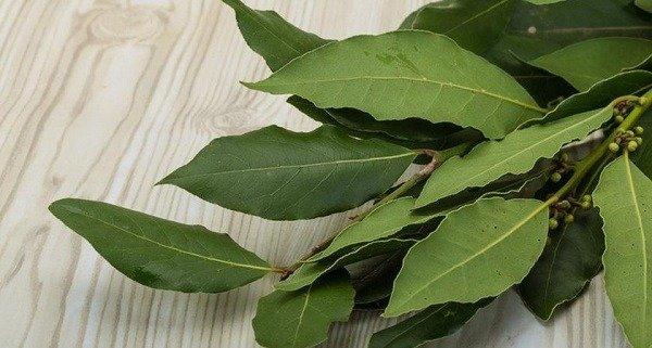 Лавровый лист - народное средство для отпугивания тараканов