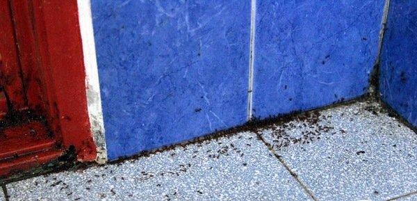 Дорожка из муравьев