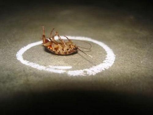 Таракан не может пересечь линию, очерченную