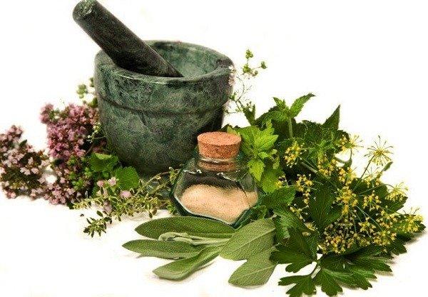 Травы от клопов - проверенное народное средство от клопов