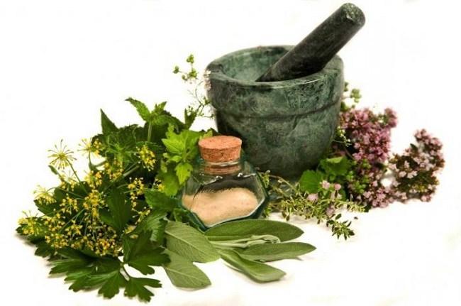 Лекарственные травы для лечения педикулеза