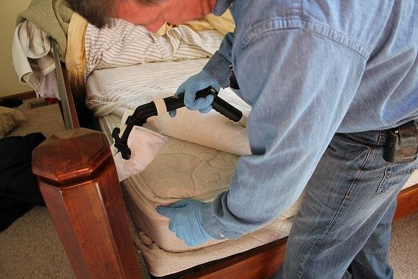 Обработка паром мягкой мебели избавит от живущих в ней клопов