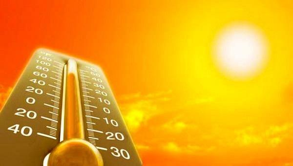 Высокая температура губительна для тараканов
