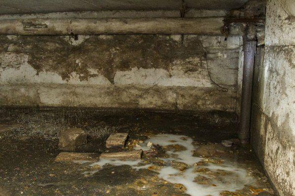 Клопы обожают темноту и сырость подвалов в плохом состоянии
