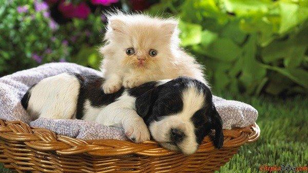 Домашние животные могут стать разносчиками заразы