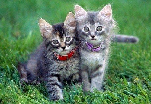 Противоблошиные ошейники могут носить животные старше трех месяцев