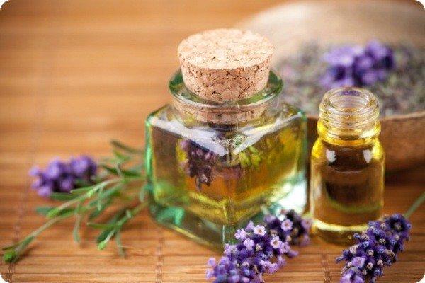 Лаванда и ее масло отличный способ избавиться от моли