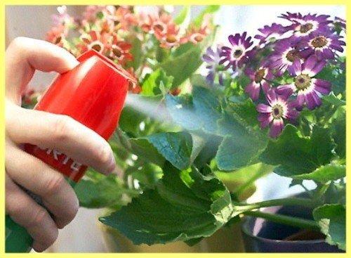 Лечение и профилактика растений от паутинного клеща