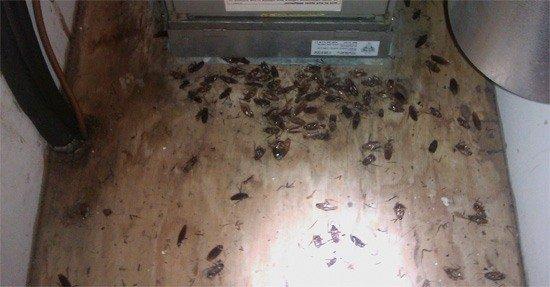 Места скопления и размножения тараканов