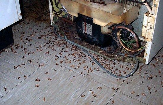Гнездо тараканов