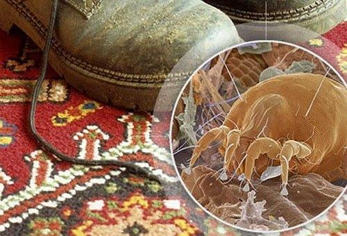 Пыльный ковер - прекрасная среда обитания постельного клеща