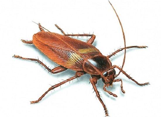 Используя ультразвуковой отпугиватель, Вы надолго избавитесь от тараканов