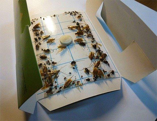 Клеевая ловушка против тараканов