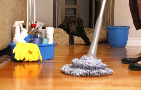 После обработки помещения Чистым Домом вымойте пол
