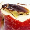 Что делать, если в доме появились тараканы?