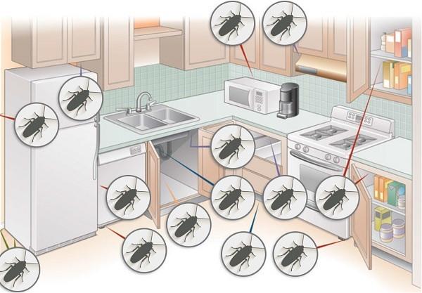 """Тщательно обработайте гелем """"Капкан"""" все места, где могут быть тараканы"""