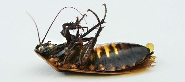 """Гель """"Капкан"""" - надежное средство против тараканов"""