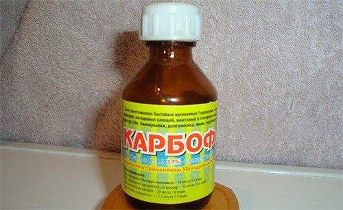 Карбофос - поможет уничтожить клопов