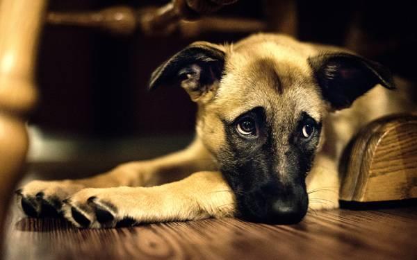 Собаки могут отказываться даже от любимой еды