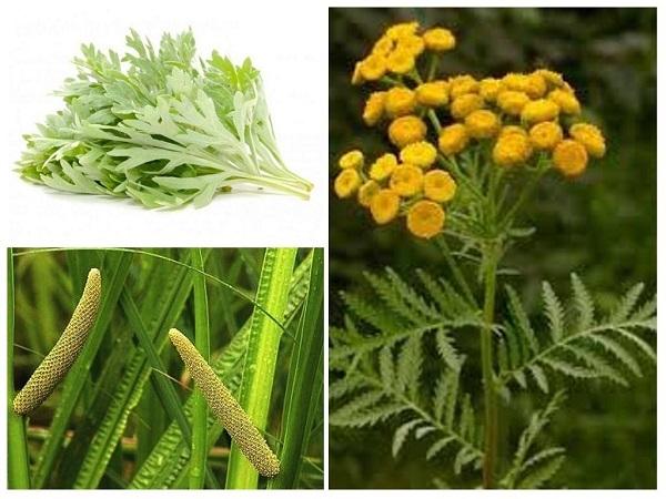 Ароматные травы отпугнут вредных насекомых