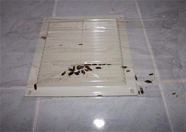 Чаще всего тараканы приходят от соседей