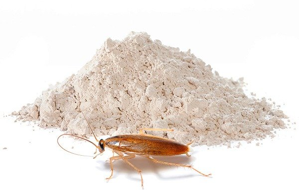 Тиурам - эффективное средство от тараканов