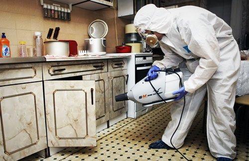 Доверьте уничтожение тараканов профессионалам
