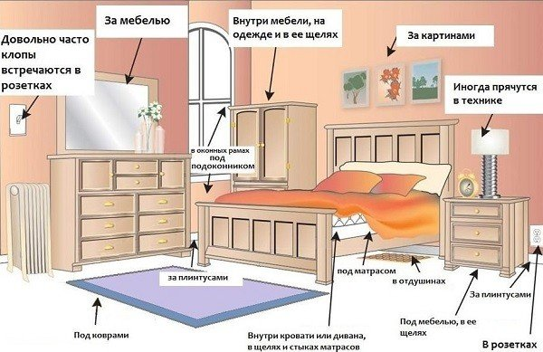 Осмотр квартиры на наличие клоповьих гнезд