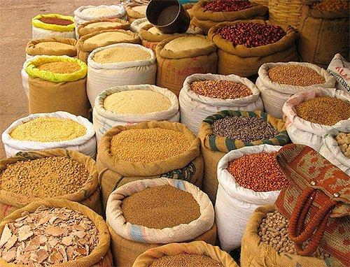 Что служит пищей для личинок моли?