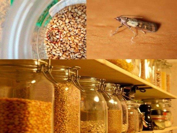 Личинки моли всеядны - они одинаково портят продукты и вещи