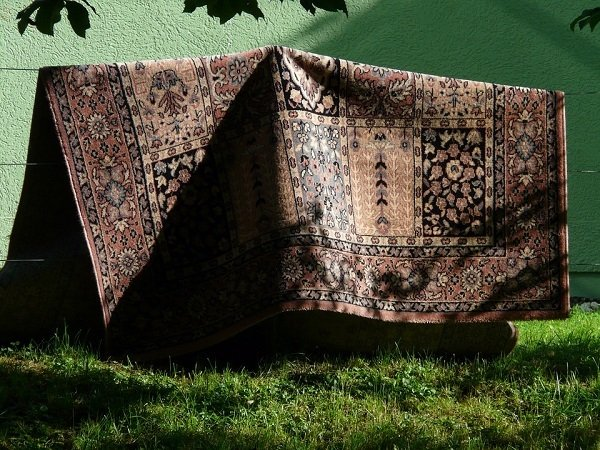 Вынесите ковры на солнце и личинки моли погибнут от жары