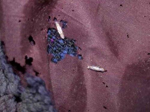 Дыры на подкладке пальто, оставленные личинками платяной моли