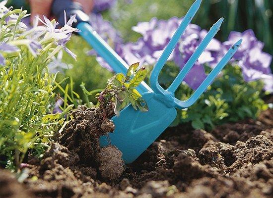 Прополка огорода поможет избавиться от вредителей