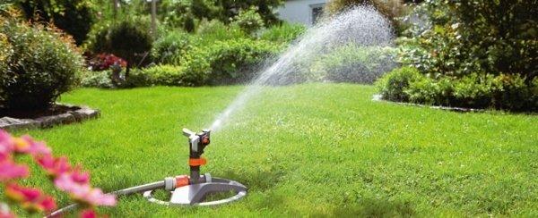 Опрыскивание лужаек водой поможет избавиться от многих насекомых