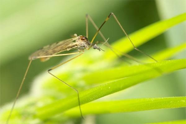 Клейкая ловушка поможет избавиться от комаров и мух
