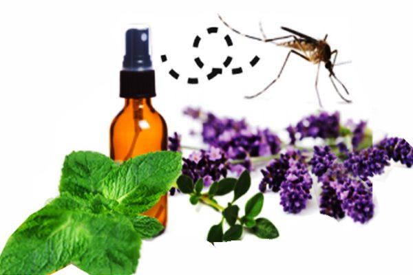 Эфирные масла помогут отпугнуть комаров