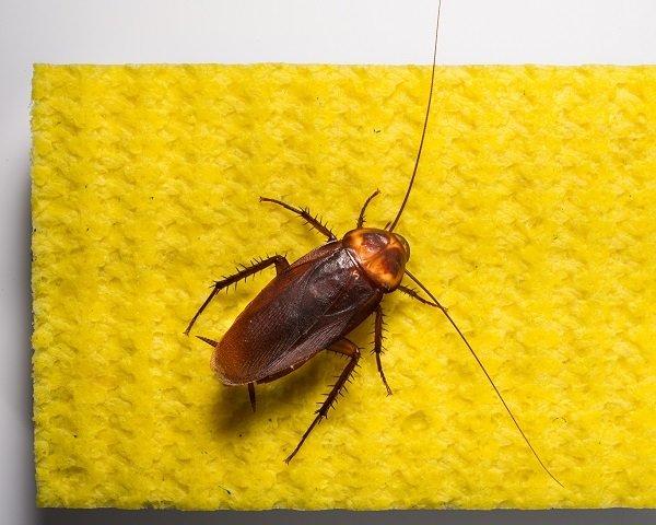 Тараканы мгновенно гибнут от препарата