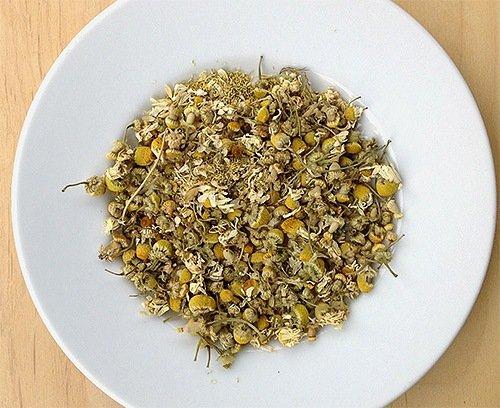 Пиретрум - средство против клопов растительного происхождения