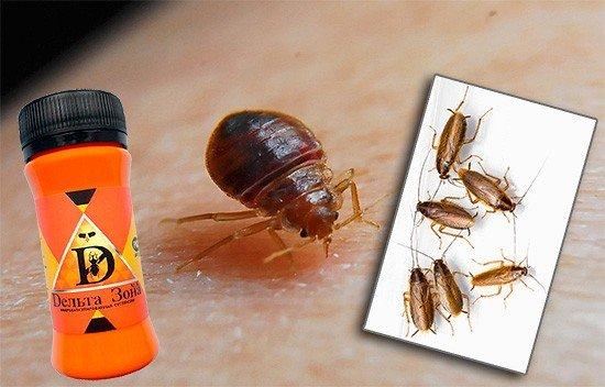 Дельта-Зона эффективно борется с клопами и другими насекомыми