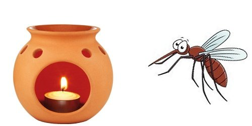 Эфирные масла являются замечательным отпугивателем комаров