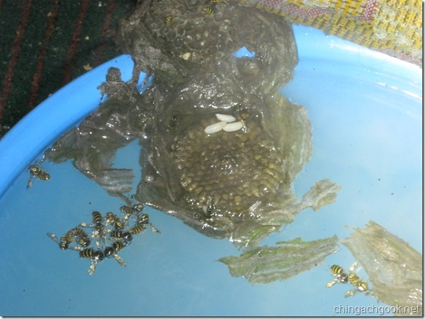 Осиное гнездо в ведре с кипятком